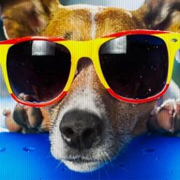 main image glasses